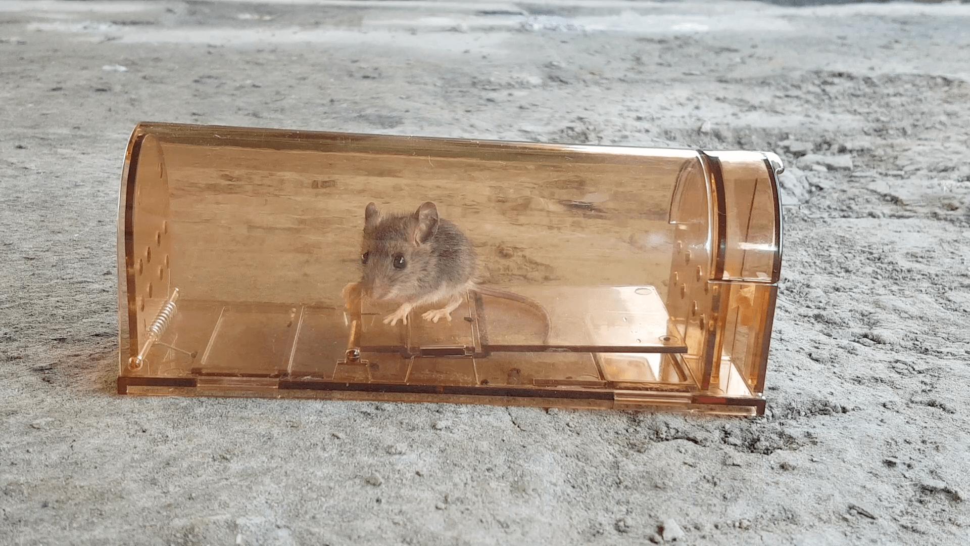 Best Humane Mouse Traps Reviews