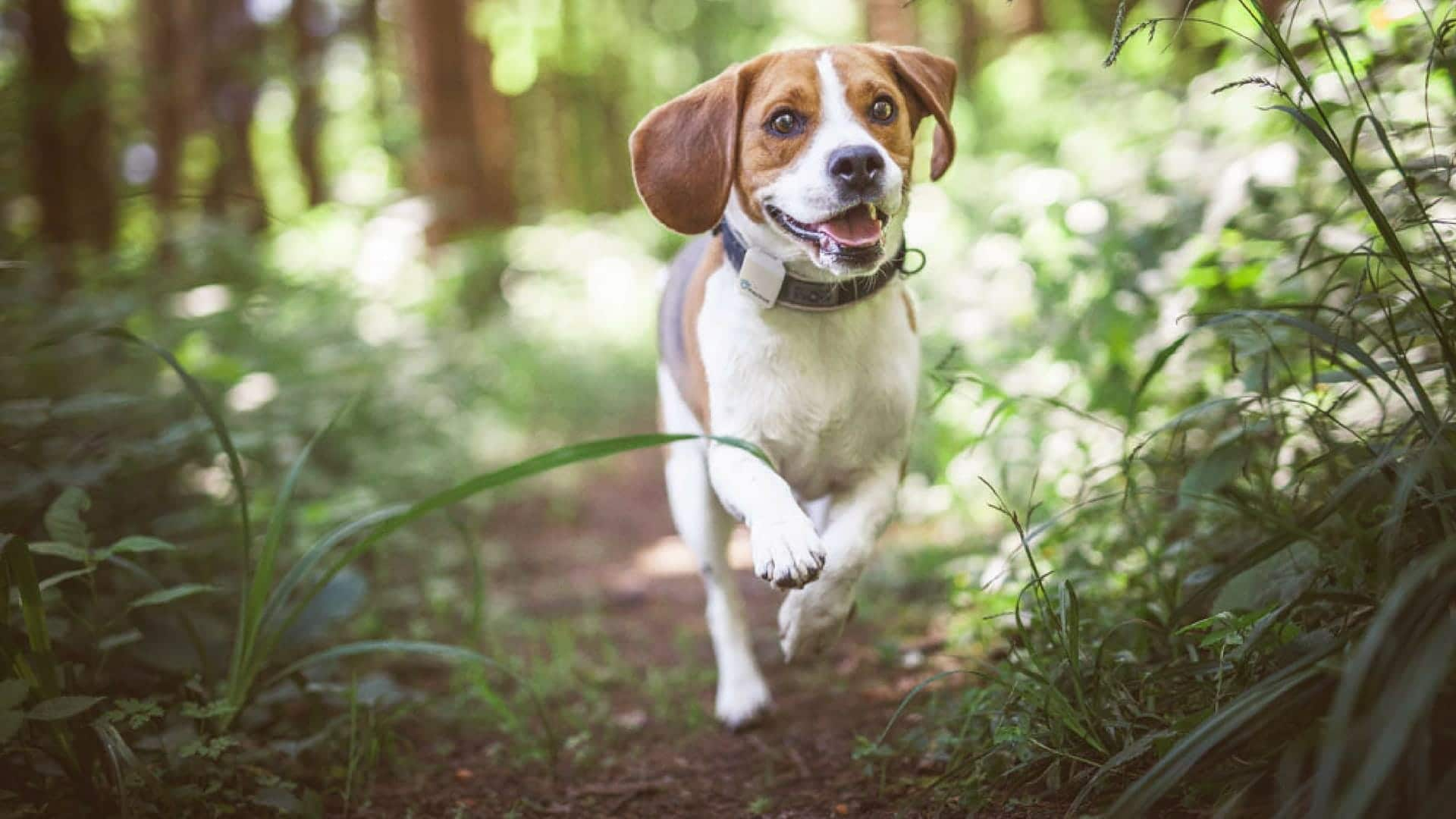 Best Activity Trackers For Dogs