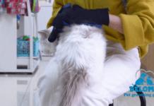 Best Pet Grooming Gloves Reviews