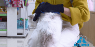 Best Pet Grooming Gloves Reviews