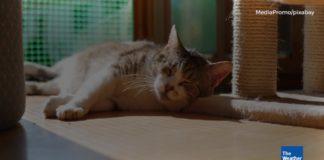 Best Cat Nail Grinder Reviews